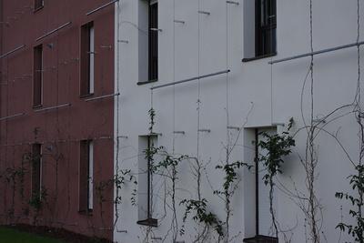 Support de mur végétal