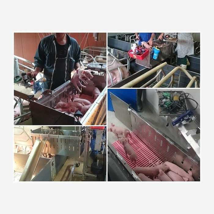 Chariot alu pour élevage porcin 1612379863506